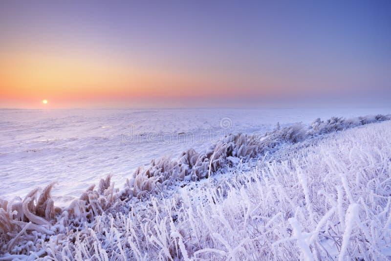 Lever de soleil au-dessus d'un lac congelé aux Pays-Bas photographie stock libre de droits