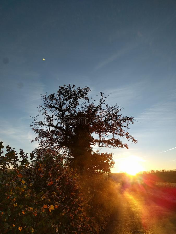 Lever de soleil au-dessus de bordure de haies photo libre de droits