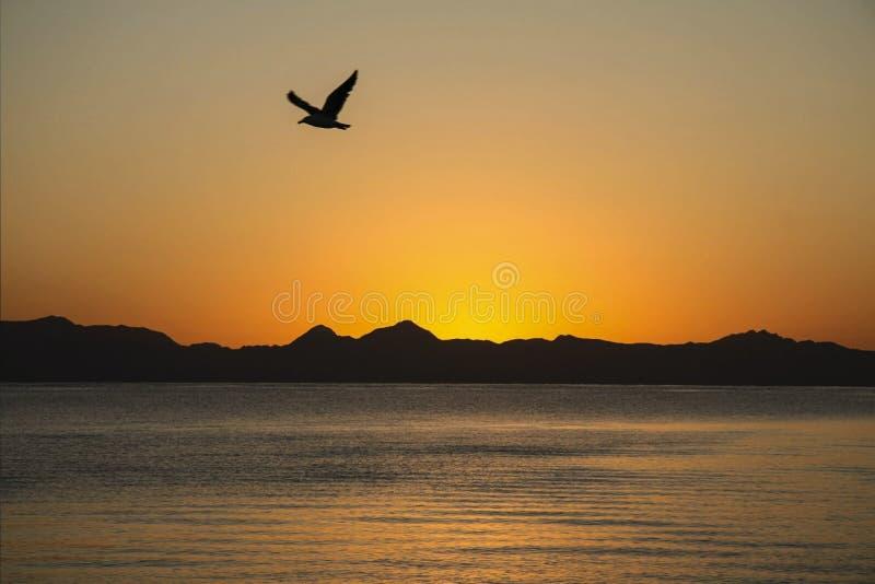 Lever de soleil au-dessus de la mer de Cortez photographie stock