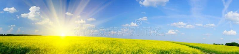 Lever de soleil au-dessus de rapefield par printemps. photographie stock