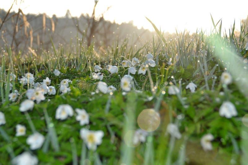 Lever de soleil au-dessus de thimbleweed en Allemagne images stock