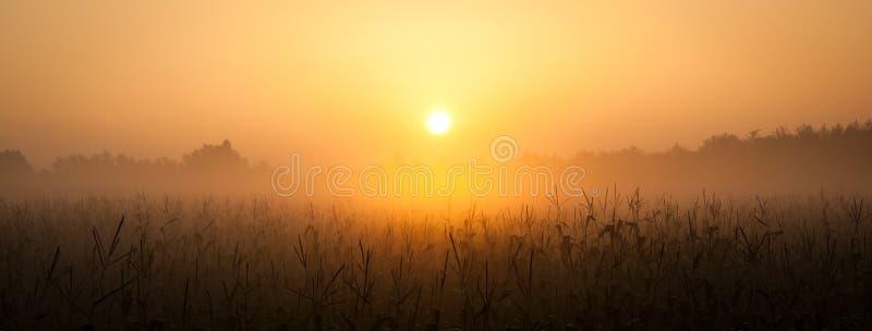 Lever de soleil au-dessus de zone de maïs photos stock