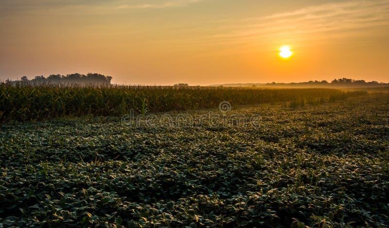 Lever de soleil au-dessus des champs de ferme dans le comté de York rural, Pennsylvanie images stock