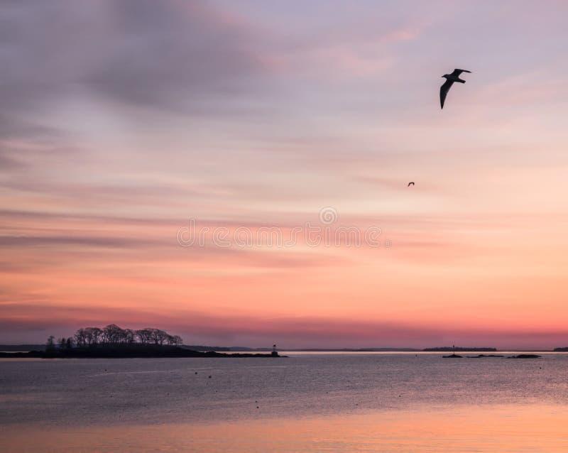 Lever de soleil au-dessus de l'océan avec la silhouette des mouettes de vol photographie stock libre de droits