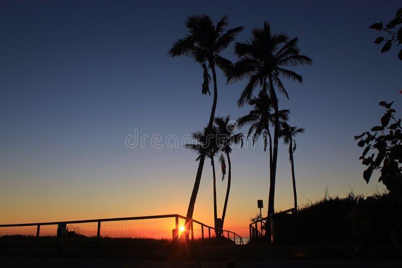 Lever de soleil au fond des palmiers image stock