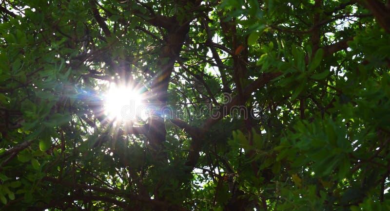 Lever de soleil au soleil de forêt par les arbres images stock