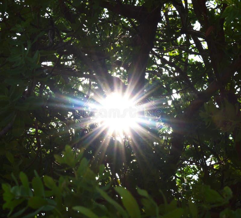 Lever de soleil au soleil de forêt par les arbres image libre de droits
