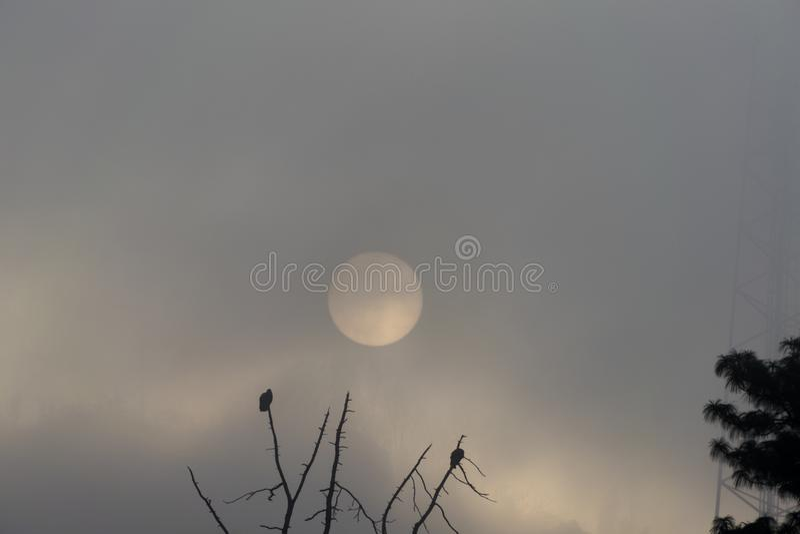 Lever de soleil au Guatemala, arbre avec des buses enlevant le vol Sun dans la brume photos libres de droits