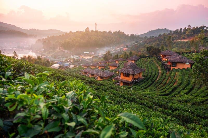 Lever de soleil au thailandais de Rak de vin de Lee, règlement chinois, Mae Hong Son, Thaïlande photographie stock