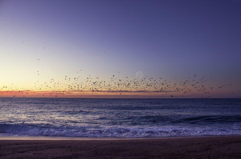 Lever de soleil avec des oiseaux photographie stock