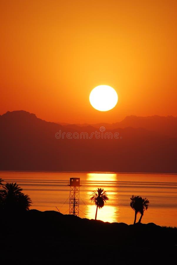 Lever de soleil avec des paumes vers le haut images libres de droits