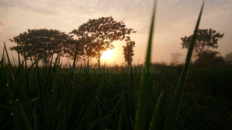 Lever de soleil avec la rosée photo libre de droits