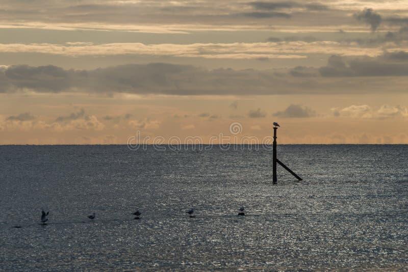 Lever de soleil avec les mouettes roosting photographie stock libre de droits