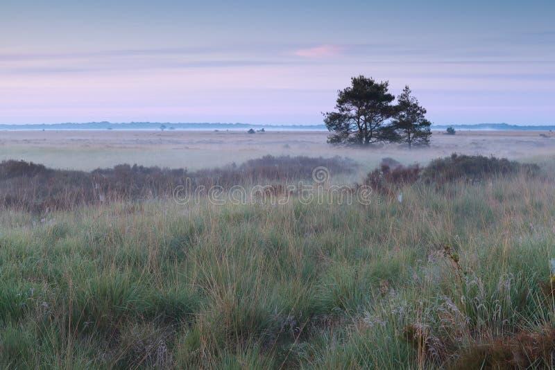 Lever de soleil brumeux d'été sur le marais image libre de droits