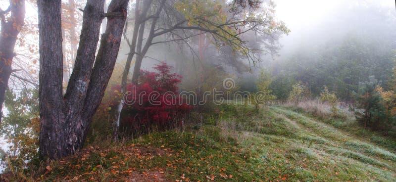 Lever de soleil brumeux d'automne photographie stock libre de droits