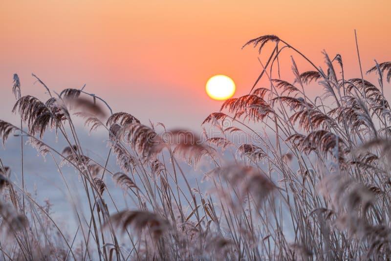 Lever de soleil brumeux de l'hiver photos libres de droits