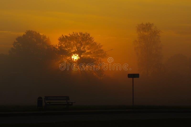 Lever de soleil brumeux mystique en parc photo libre de droits