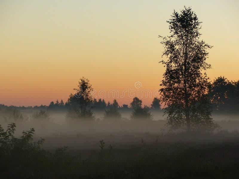 Lever de soleil brumeux sur la bruyère photo stock
