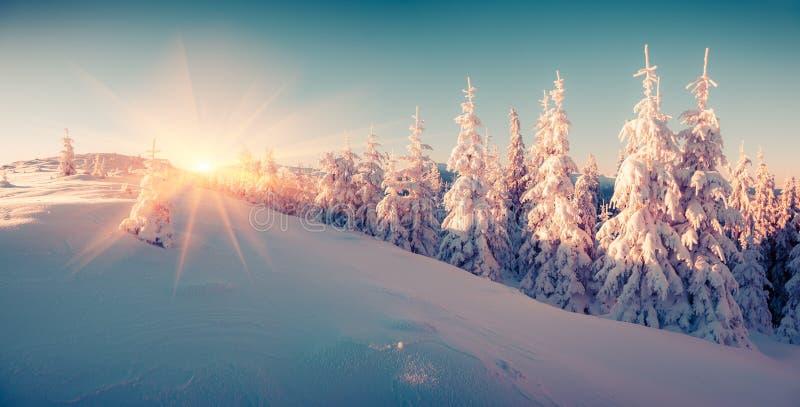 Lever de soleil coloré d'hiver dans la forêt de montagne images stock