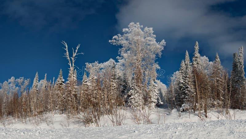 Lever de soleil d'hiver dans les montagnes d'Altai photographie stock libre de droits