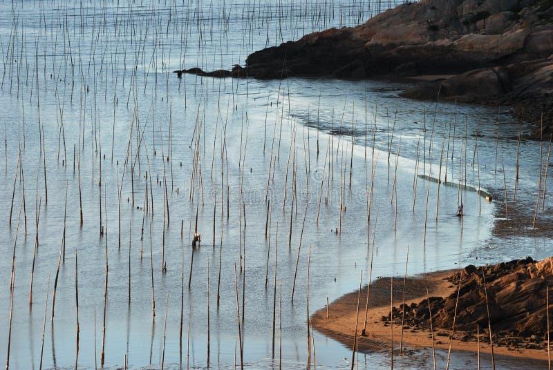 Lever de soleil d'Infertidal Mudflat de Xiapu photographie stock