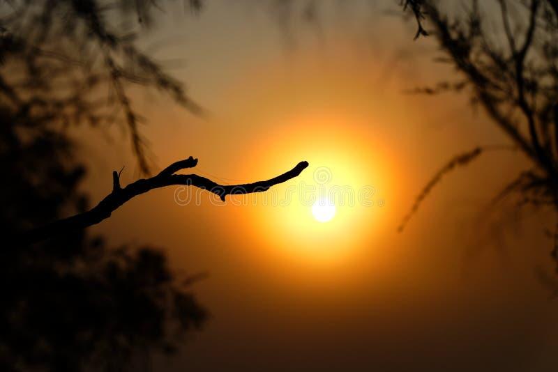 Lever de soleil d'or sur la colline photo libre de droits
