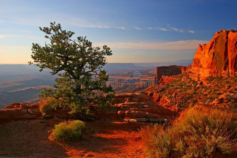Lever de soleil dans Canyonlands images libres de droits