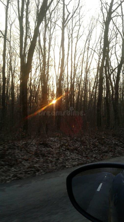 Lever de soleil dans la forêt image stock