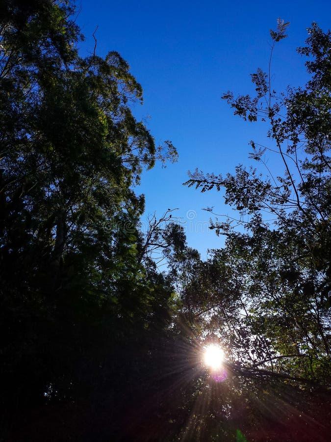 Lever de soleil dans la forêt images libres de droits