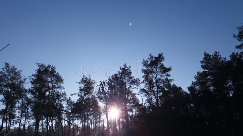 Lever de soleil dans la forêt d'hiver photographie stock