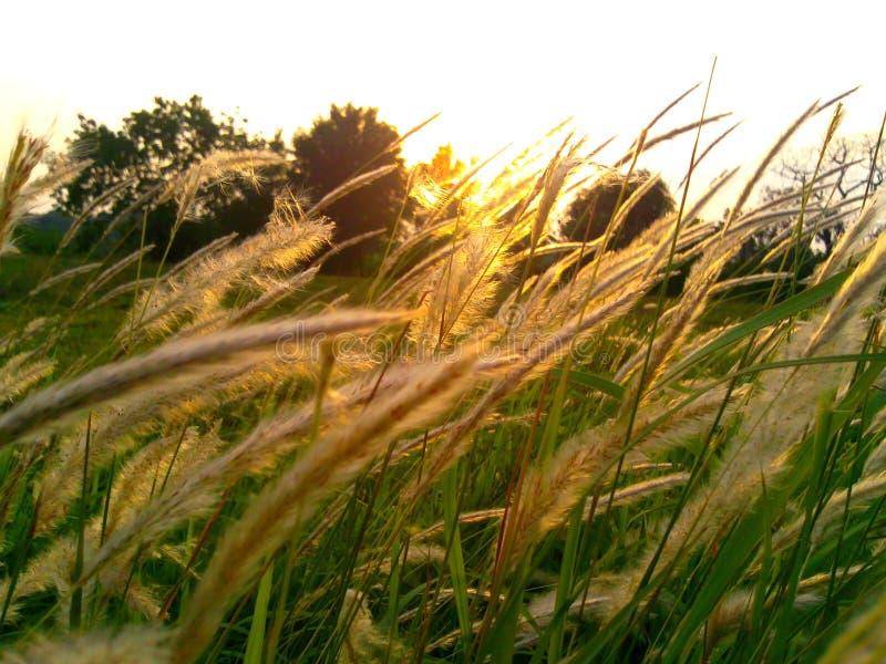 Lever de soleil dans le pré un matin image stock