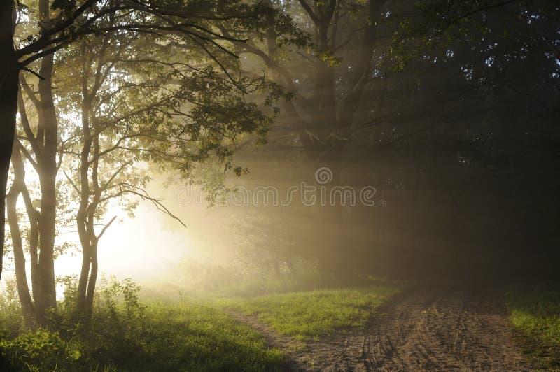 Lever de soleil dans les bois photos libres de droits