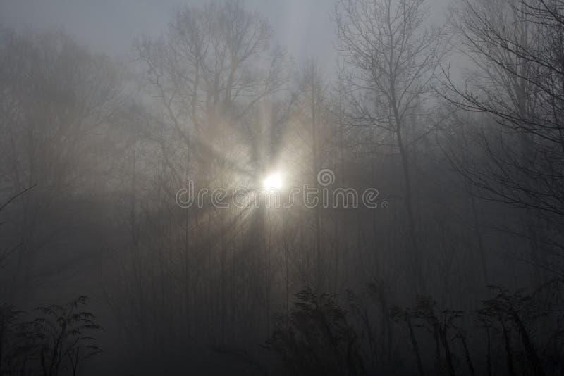 Lever de soleil dans les bois photo libre de droits