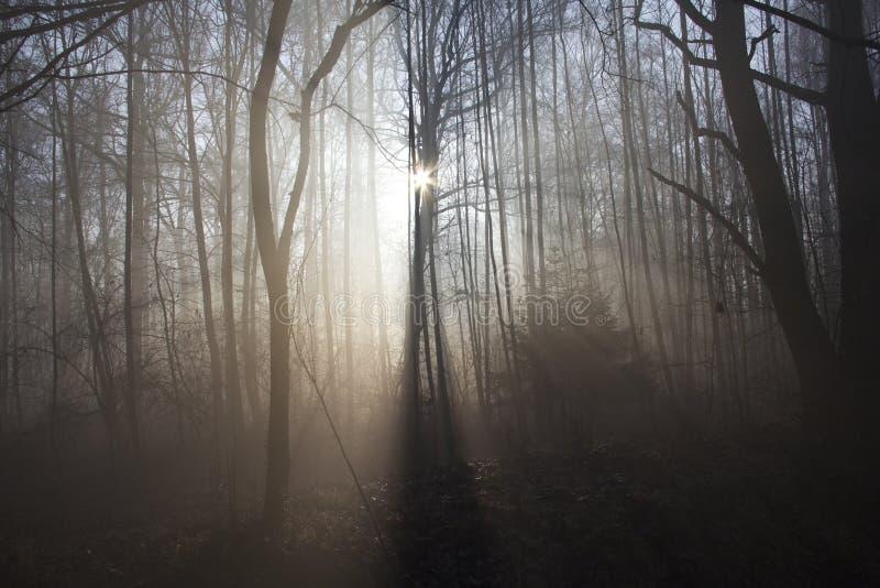 Lever de soleil dans les bois images stock