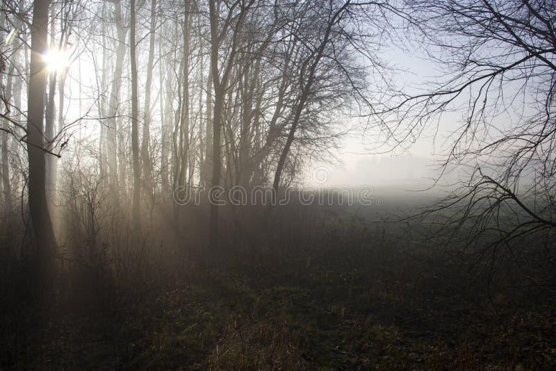 Lever de soleil dans les bois images libres de droits