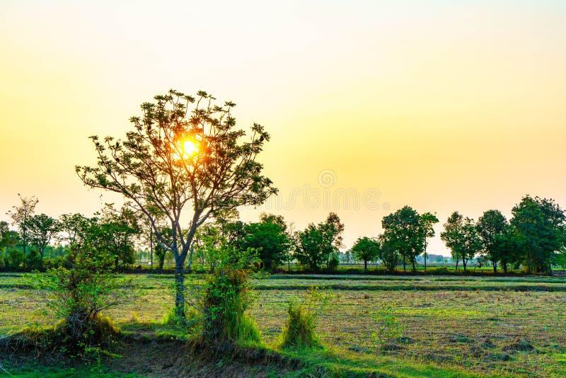 Lever de soleil dans moring sur le champ image libre de droits