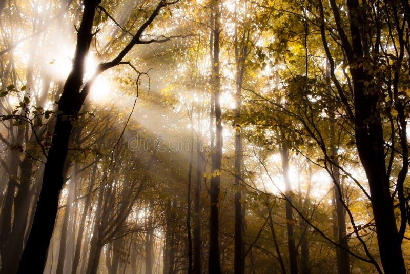Lever de soleil dans une forêt images libres de droits