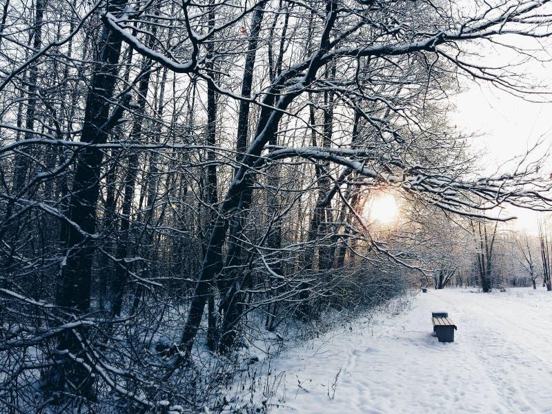 Lever de soleil dans une forêt tranquille d'hiver photo libre de droits
