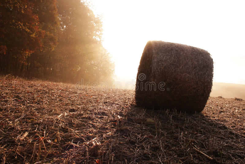 Lever de soleil de champ photographie stock libre de droits