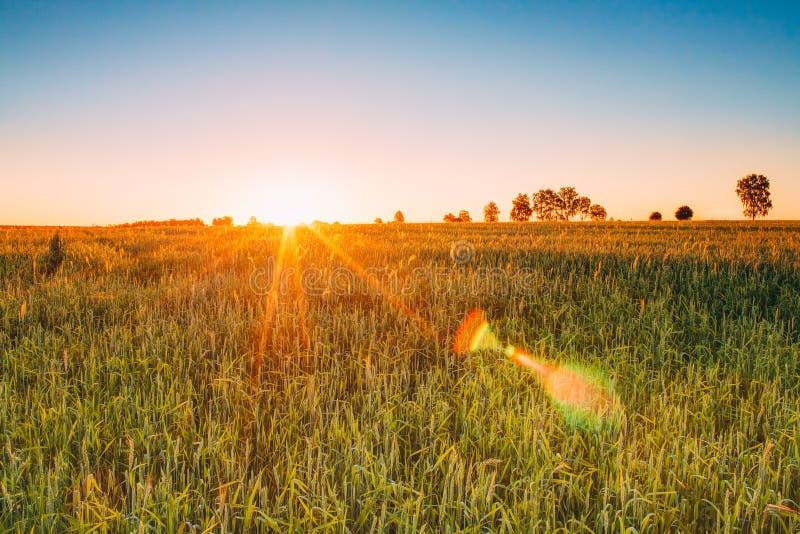 Lever de soleil de coucher du soleil au-dessus de champ de blé Éclat de Sun au-dessus de pré vert photographie stock
