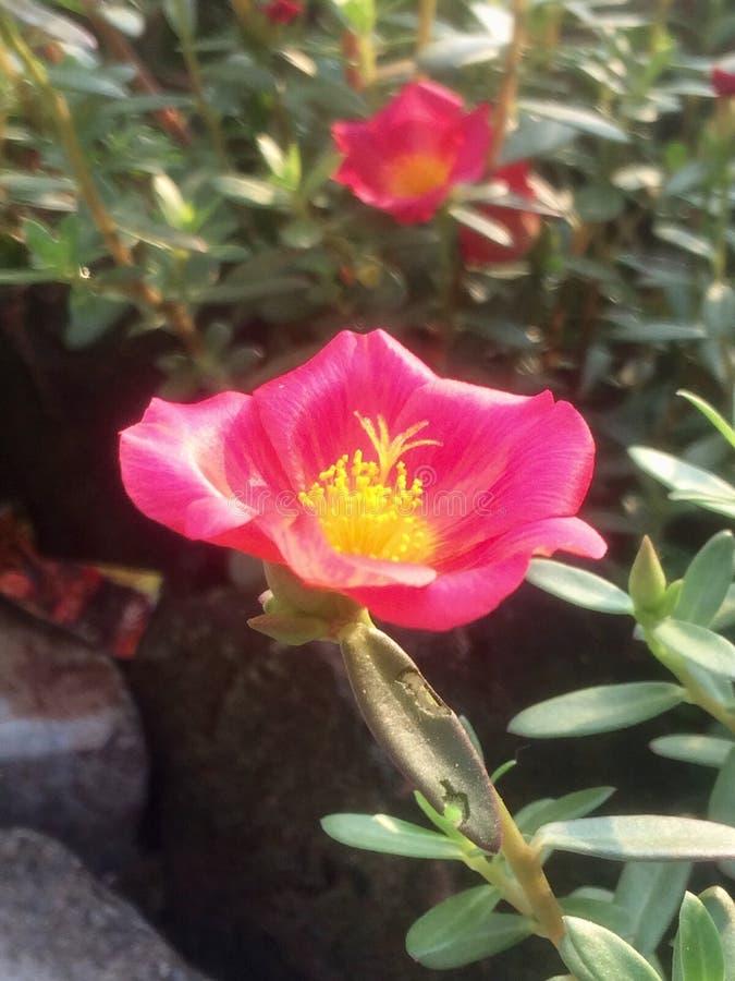 Lever de soleil de fleur photos libres de droits