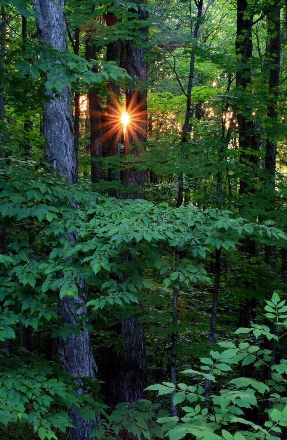 Lever de soleil de forêt images stock