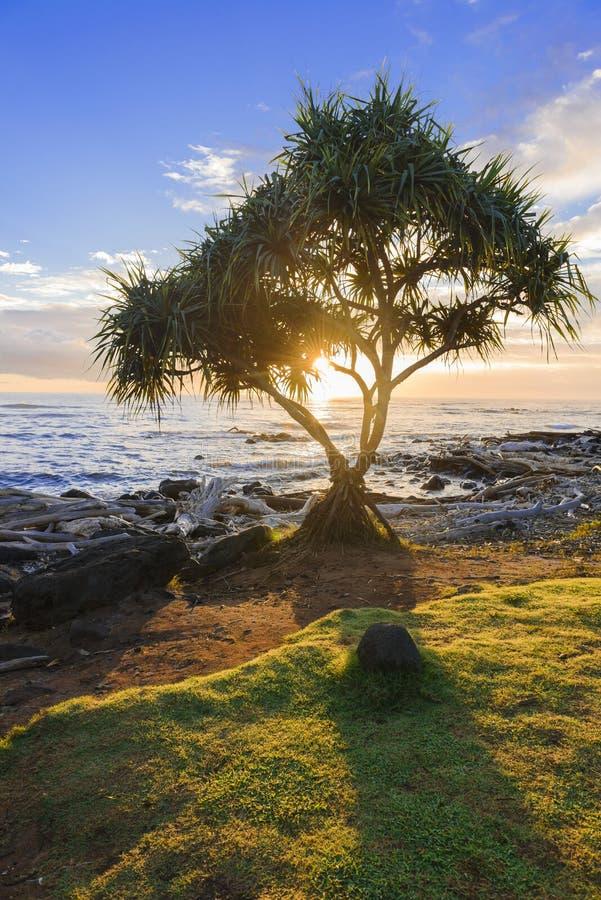 Lever de soleil 1 de Kauai images libres de droits