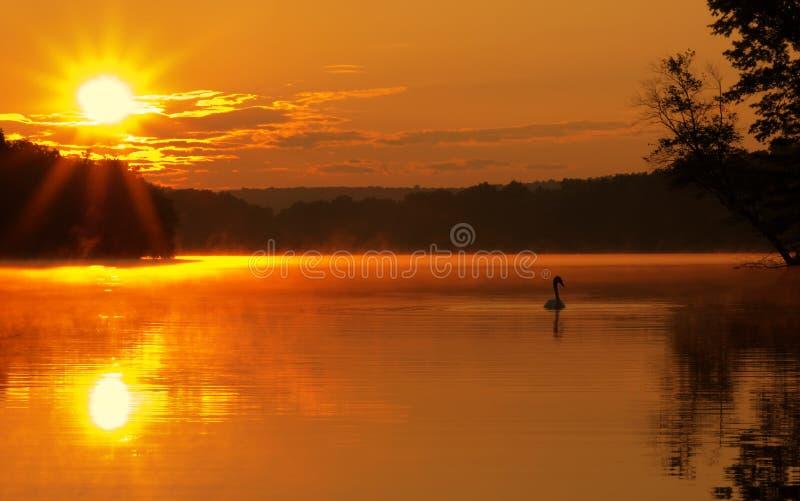 Lever de soleil de lac avec le cygne