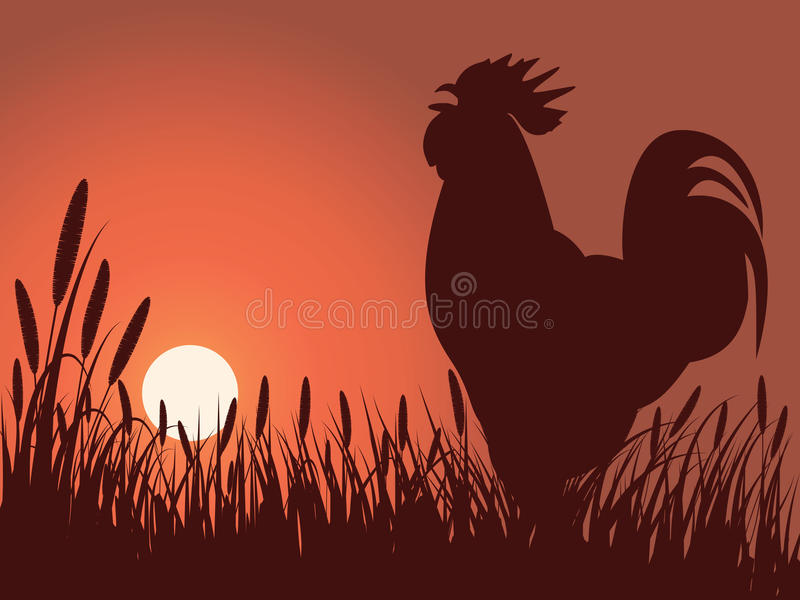 Lever de soleil de salutation de coq photo libre de droits
