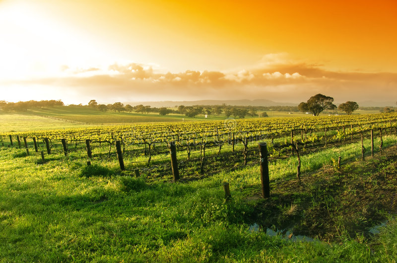 Lever de soleil de vigne photographie stock libre de droits