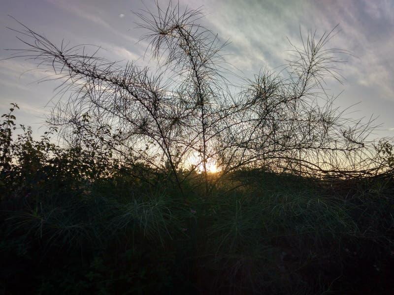 Lever de soleil derrière l'arbre image libre de droits