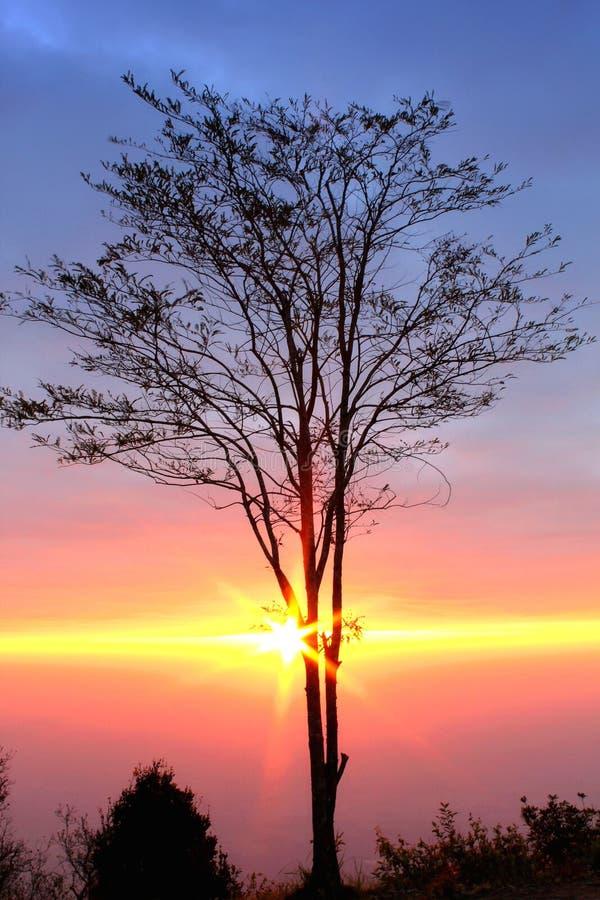 Lever de soleil derrière l'arbre dans le beau matin au parc national de Phu Kradueng image stock