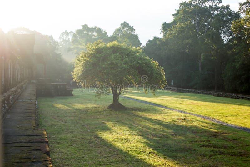 Lever de soleil en parc image libre de droits