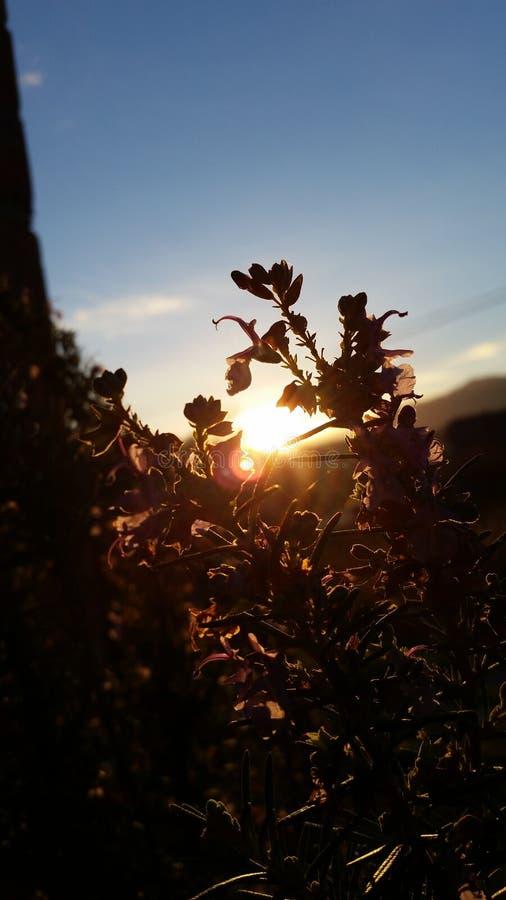 Lever de soleil et fleur image libre de droits